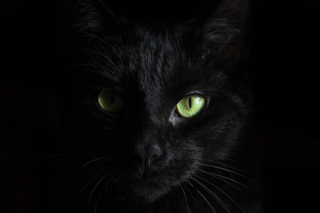 closeup of black cat with green eyes